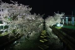 ハピネスビラの近隣(中江川の千本桜)の風景