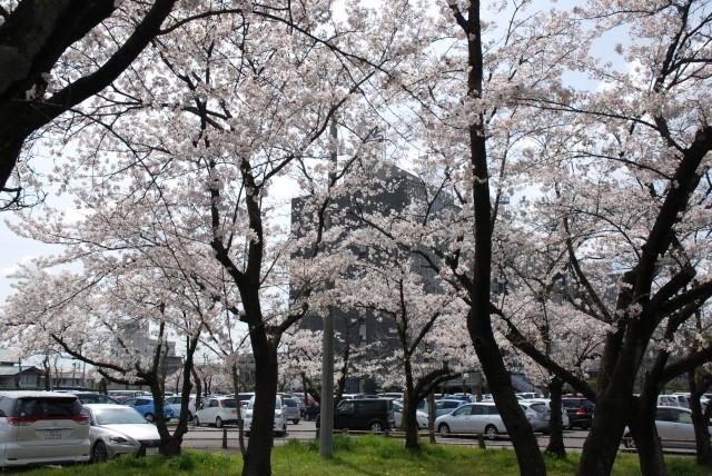 るぴなすビラの近隣(岐阜県庁前)